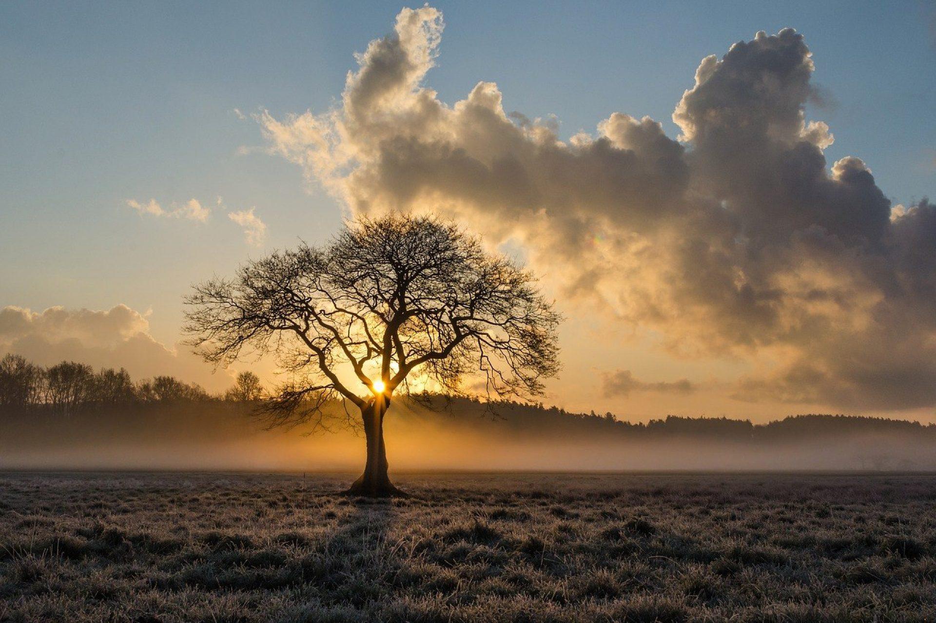 der_lebensbaum
